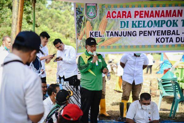 Di Tanjung Penyembal, Wakil Wali Kota Dumai Menanam Jagung Hibrida