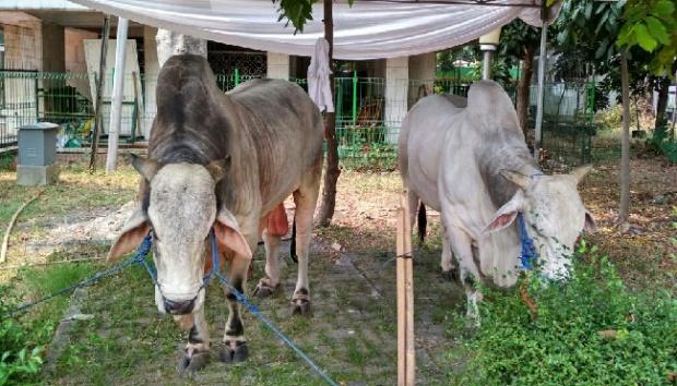 Wilmar Unit Dumai-Pelintung Salurkan 16 Ekor Hewan Qurban