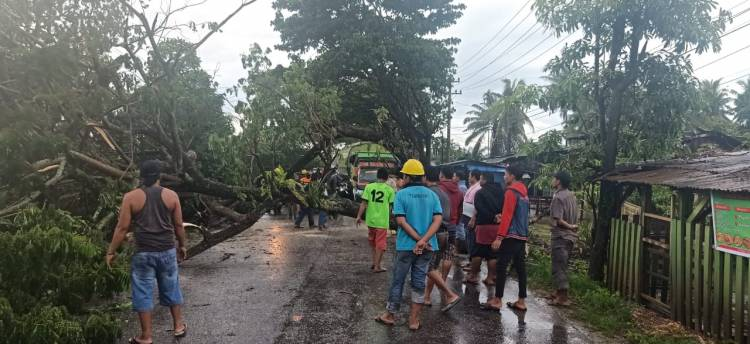 Dumai Diguyur Hujan, Pohon Besar Tumbang Tutupi Akses Kawasan Industri Lubuk Gaung