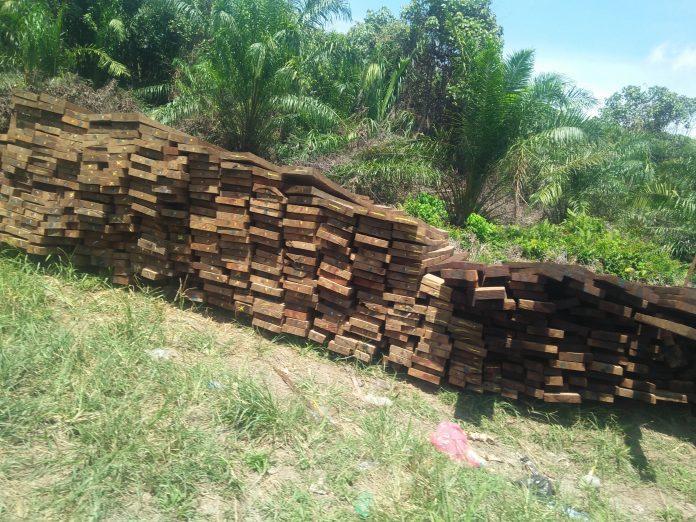 Aktifitas Ilegal Loging Diduga Marak Dilakukan di Hutan Senepis Dumai
