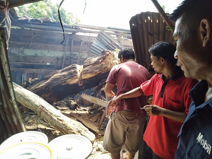 Usai di Senggol Mobil, Rumah Tukang Becak di Dumai Ambruk Ditimpa Pohon Besar